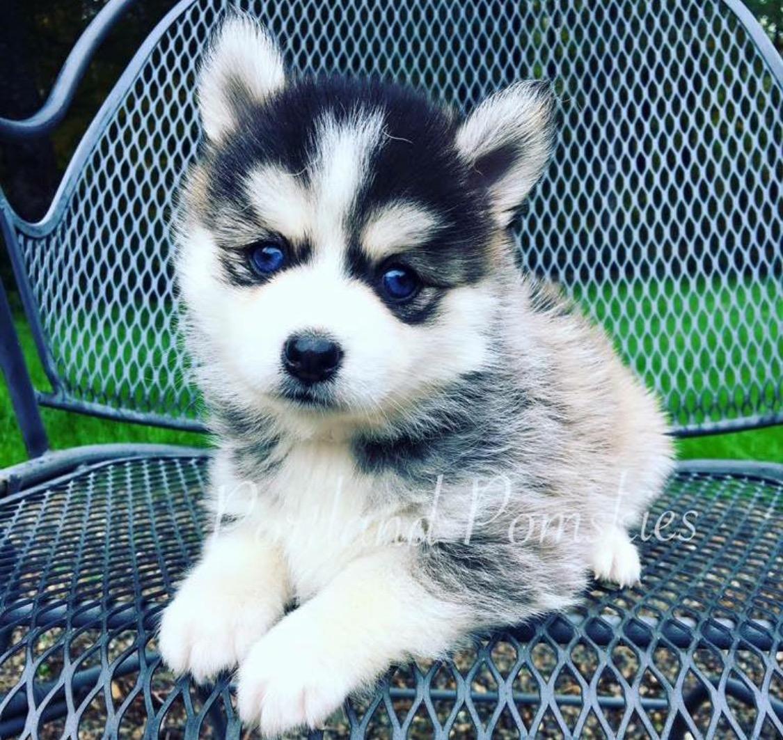 Where Can I Adopt A Dog In Portland